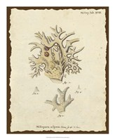 Natura Coral VI Framed Print