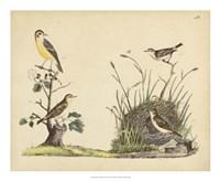 Wrens, Warblers & Nests II Fine Art Print