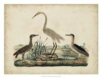 Great White Heron & Night Heron Fine Art Print