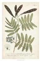 Miller Ferns I Fine Art Print