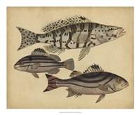 Species of Fish I Fine Art Print