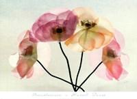 Translucence Fine Art Print