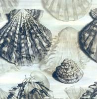 Shell engraving 2 Fine Art Print