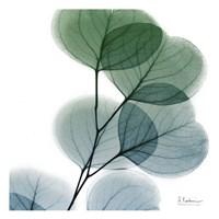 Dull Eucalyptus Fine Art Print