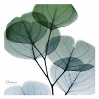 Dull Eucalyptus Mate Fine Art Print