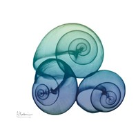 Sea Sky Snails Fine Art Print