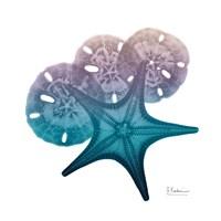 Ocean Hues Starfish and Sand Dollar Fine Art Print