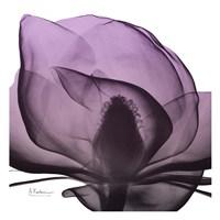 Magnolia Wine Beauty Framed Print