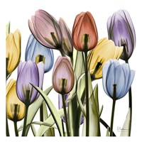 Tulipscape Fine Art Print
