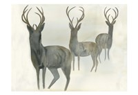 Deer Trio Fine Art Print