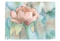 Blush Rose Framed Print
