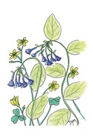 Virginia Bluebells Fine Art Print
