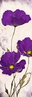 Purple Look Framed Print