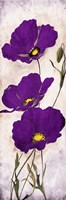 Purple Look Mate Framed Print