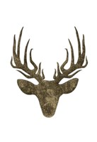 Aged Deer Mate Framed Print