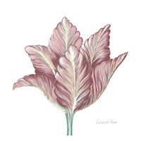 Romantic Tulip 1 Fine Art Print