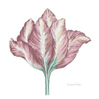 Romantic Tulip 2 Fine Art Print