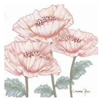 Pink Poppies 2 Fine Art Print
