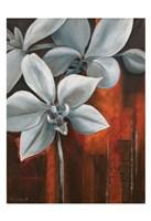 Pearl Orchid I Fine Art Print