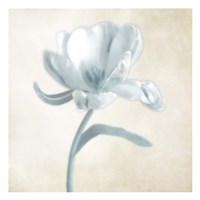 Blue Ivory Blossom 1 Fine Art Print