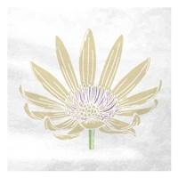Mellow Flower Framed Print