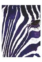 Blue Zebra Mate Fine Art Print