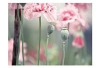 Poppy Pink Fine Art Print