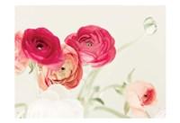Spring Rannys Fine Art Print