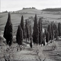Tuscany IV Fine Art Print