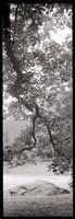 Hampton Field Tree I Fine Art Print