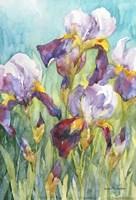 Iris Blue Skies Fine Art Print
