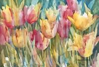 Pastel Tulips Fine Art Print