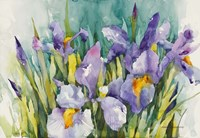 Purple Irises Fine Art Print