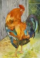 Rooster Pen Fine Art Print