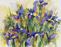 Indelible Irises Fine Art Print