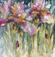 Siberian Iris Fine Art Print