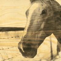 Portrait of a Horse Fine Art Print