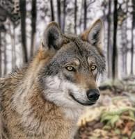 Wolf 1 Fine Art Print