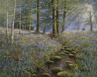 Bluebell Wood Fine Art Print