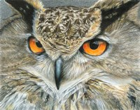 Orange-Eyed Owl Fine Art Print