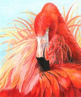 Red Flamingo Fine Art Print