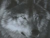 Dark Wolf Fine Art Print