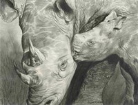 Rhino Love Fine Art Print