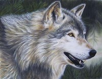 Timber Wolf Dark Fine Art Print