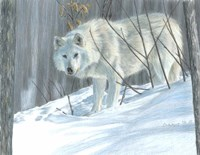 Winter Wolf Fine Art Print