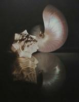 Pearl Nautilus Fine Art Print