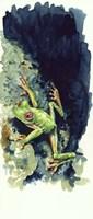 Costa Rican Frog Fine Art Print