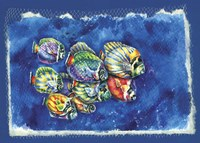 Fish In Net Fine Art Print
