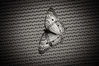 Butterfly Contrast Fine Art Print
