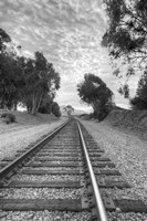 On The Right Track Fine Art Print
